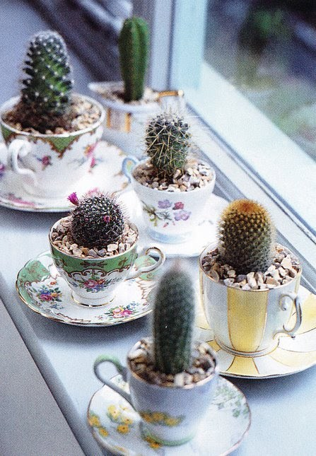 DIY Mini Cacti Garden Using Thrifted Teacups. Teacups are cheap, cacti are cheap and very hard to kill and live for decades if you take care of them (if you don't over water them). Image from here.