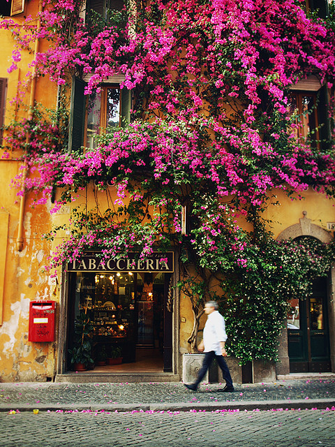 georgianadesign:  A profusion in Rome. Bougainvillea by Redcipolla.