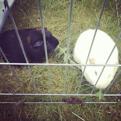 Aww my little piggys (Taken with instagram)