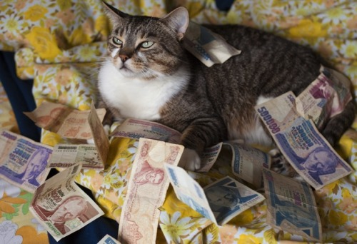 "cashcats:  ""It's easy to sit there and say you'd like to have more money. And I guess that's what I like about it. It's easy."" Jack Handey"