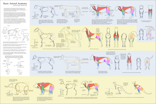 pythosblaze:  animationtidbits:  Guide to Drawing Horses & Birds - Cedarseed  Reblogging this so I can find it again. 'Cause daaaamn
