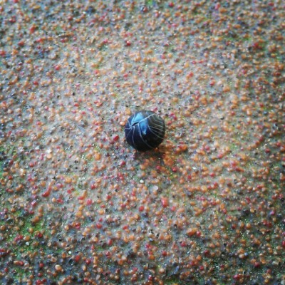 Found a Rolly Polly #photodayapril #bug (Taken with instagram)