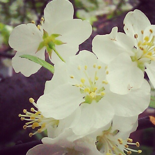 I love spring (Taken with instagram)