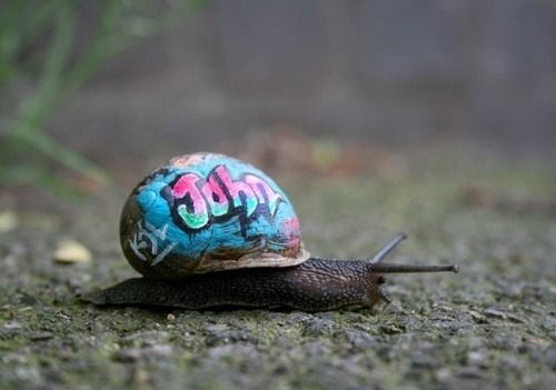 Wat up it's snail from the hood.
