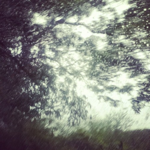 #nature #trees #laspiedras #puertorico #raindrops  (Taken with instagram)