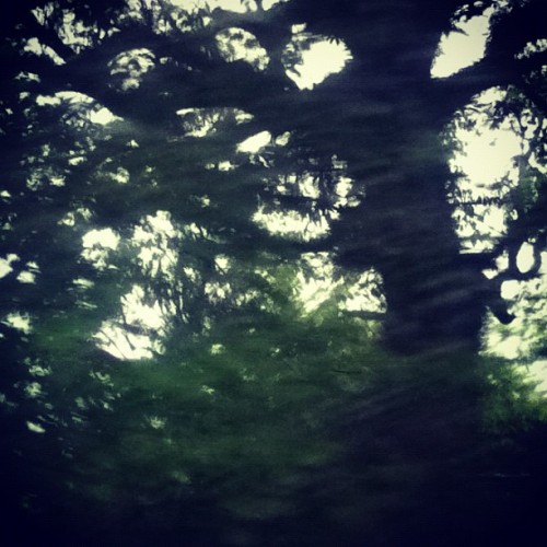 #puertorico #laspiedras #nature #trees #raindrops (Taken with instagram)