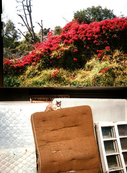 Cats, mattresses, and bourgainvillea. All good things.