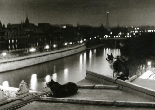 "northerndelight:  ""Paris, les chats, la nuit"", Robert Doisneau, Paris, 1954 Robert Doisneau 100th Birthday"