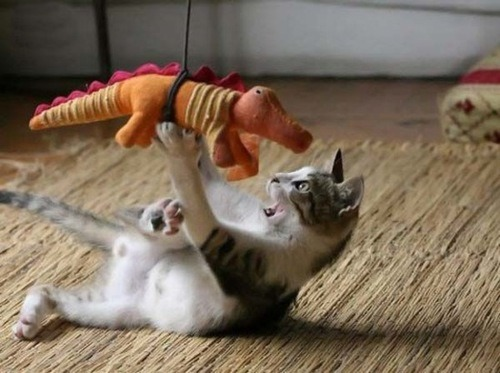 …and that's how dinosaurs became extinct…