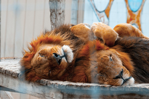 anomalisticminds:  Nap Time! by Dr. Ilia on Flickr.