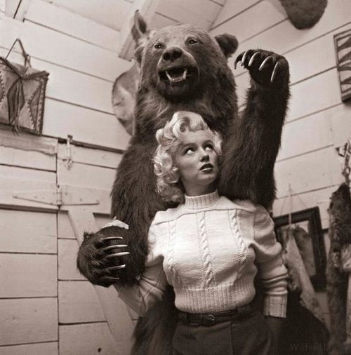 wilfreddoree:  Marilyn and a Bear