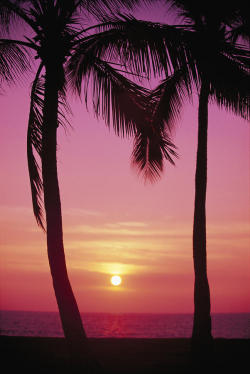 love-knot:  Sun Sets Between Palms…