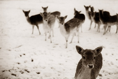 journalofanobody:  Deer of the Damned