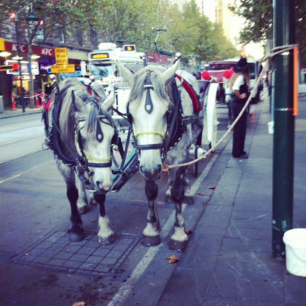 Do you like your job? Neigh. #melbourne  (Taken with instagram)