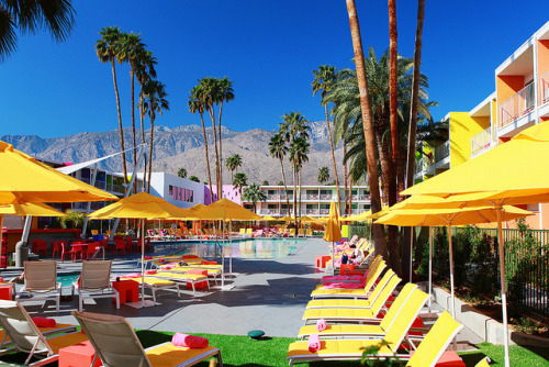 Palm springs hotel pool - The Saguaro on Flickr.