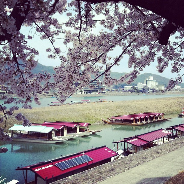 Cherry trees and the Nagara river. This year was really beautiful. (Taken with Instagram at 長良橋)