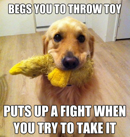tastefullyoffensive:  Dog logic  Oh dog you're such a tease