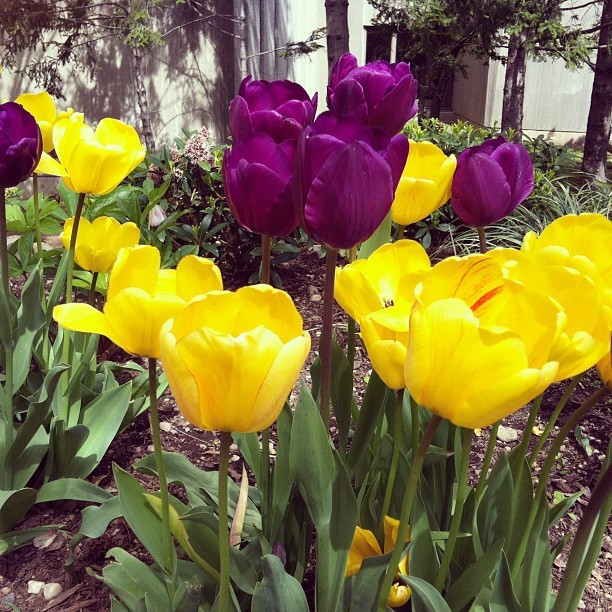 Hofstra's in bloom. #hofstra (Taken with instagram)