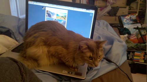 getoutoftherecat:  get off of there cat. can't you see i'm trying to tumbl?
