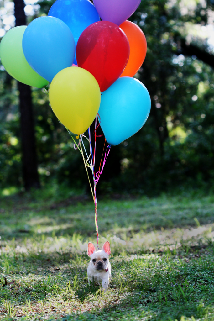 Franny travels via balloons.  By Amelia
