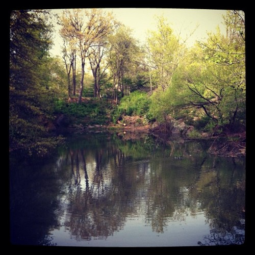 Central Park (Taken with instagram)