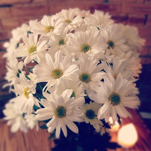 When in doubt, buy yourself daisies. (Taken with instagram)
