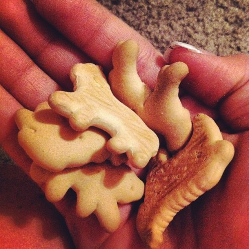 Animal crackers :) #love #yum  (Taken with instagram)