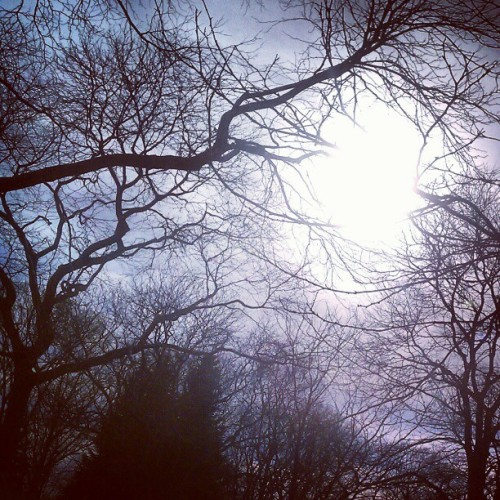 Arnold Arboretum (Taken with instagram)
