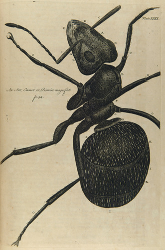 compendium-of-beasts:  Robert Hooke, 1635-1703. Micrographia restaurata: or, The Copper-plates of Dr. Hooke's Wonderful Discoveries by the Microscop. 1745 via University of Delaware
