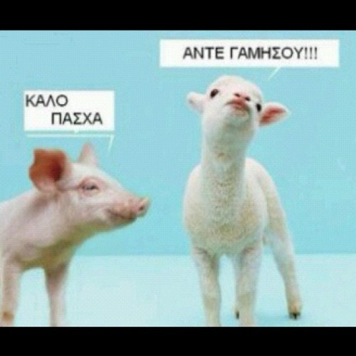 LOOLL!!!! I'm dyinggggggg!! Tough day to be a lamb. #GreekEaster (Taken with instagram)
