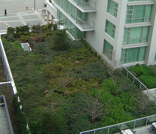 calarose:   Toronto becomes first city to mandate green roofs Toronto is the first city in North America with a bylaw that requires roofs to be green. And we're not talking about paint. A green roof, also known as a living roof, uses various hardy plants to create a barrier between the sun's rays and the tiles or shingles of the roof. The plants love the sun, and the building (and its inhabitants) enjoy more comfortable indoor temperatures as a result. Toronto's new legislation will require all residential, commercial and institutional buildings over 2,000 square meters to have between 20 and 60 percent living roofs. Although it's been in place since early 2010, the bylaw will apply to new industrial development as of April 30, 2012. While this is the first city-wide mandate involving green roofs, Toronto's decision follow's in the footsteps of other cities, like Chicago and New York. Under the direction of Mayor Richard Daley the city of Chicago put a 38,800 square foot green roof on a 12 story skyscraper in 2000. Twelve years later, that building now saves $5000 annually on utility bills, and Chicago boasts 7 million square feet of green roof space. New York has followed suit, and since planting a green roof on the Con Edison Learning Centre in Queens, the buildings managers have seen a 34 percent reduction of heat loss in winter, and reduced summer heat gain by 84 percent. But lower utility bills aren't the only benefit of planting a living roof. In addition to cooling down the city, green roofs create cleaner air, cleaner water, and provide a peaceful oasis for people, birds and insects in an otherwise polluted, concrete and asphalt-covered environment.  WOOOO! Proud to be Canadian and from the GTA :D  that is so cool.