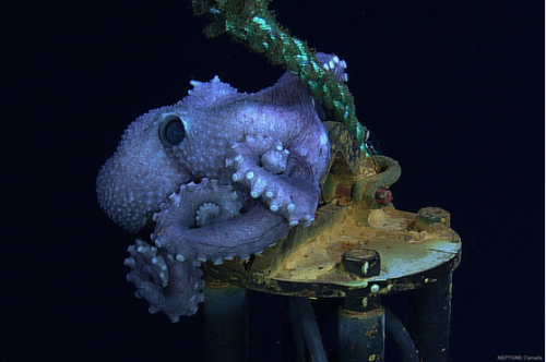 This charming octopus apparently made this installation its home for multiple years! Via the delightful Neptune Canada.
