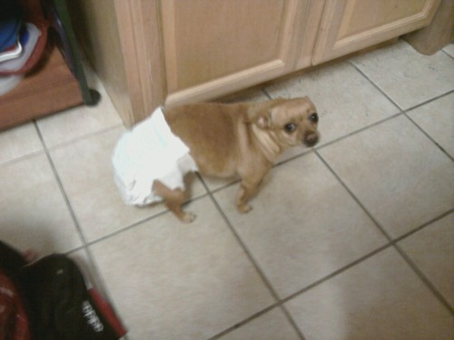 commanderhuxley:  My dog started her period today
