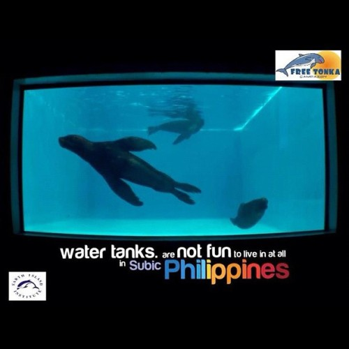 Water tanks are NOT FUN to live in at all in Ocean Adventure Subic, Philippines #no2animalcaptivity #freetonka #tweet4tonka  (Taken with instagram)