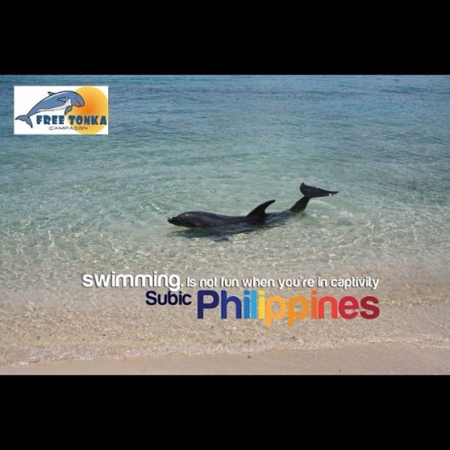 Swimming is NOT FUN when in captivity in Ocean Adventure Subic, Philippines #freetonka #tweet4tonka #no2animalcaptivity  (Taken with instagram)