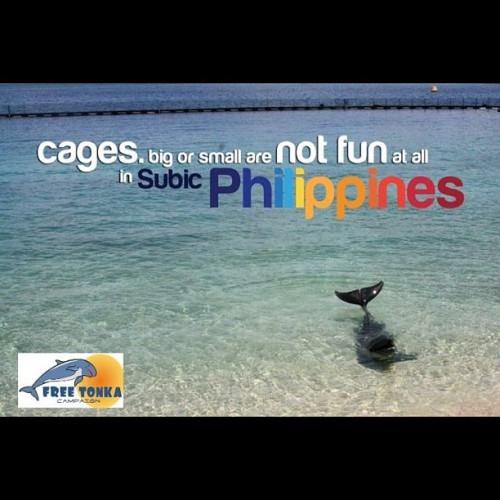 CAGES, big or small, are still cages… Captivity is NOT FUN in Ocean Adventure Subic, Philipines #freetonka #tweet4tonka #no2animalcaptivity  (Taken with instagram)