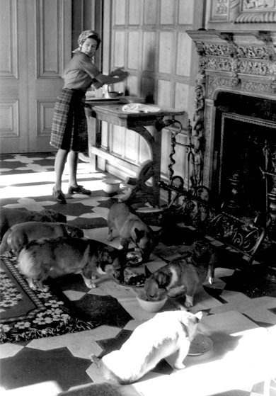 Queen Elizabeth, wearing a kilt and a headscarf, feeding her corgis