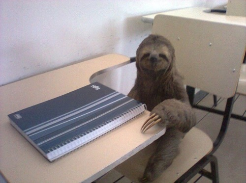 not-a-triangle:  cause every blog needs a sloth