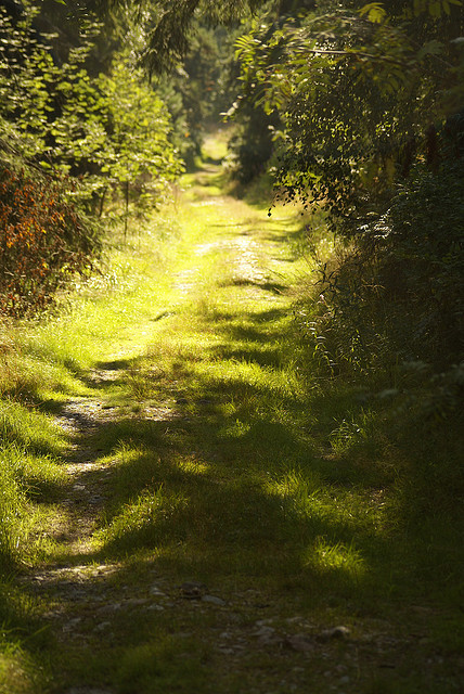 elorablue:  Melkki Path by Bull Rider on Flickr.