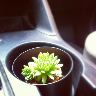 Cup holder cactus (Taken with instagram)