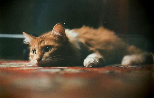 venturalize:  untitled by sobaka Pavlova on Flickr.