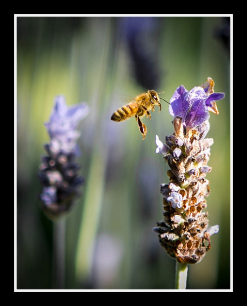 04.14.2012: Taking snaps in bee territory on Flickr.