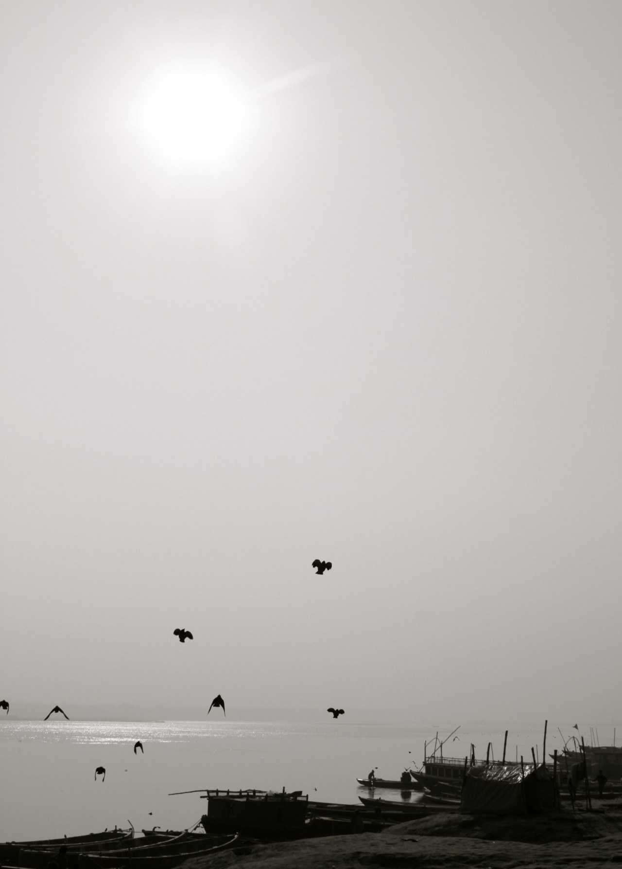birds taking flight over the ganges
