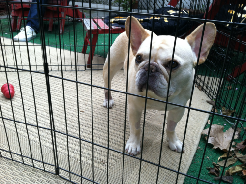 "walter's sunday soundtrack: ""puppy prison blues"" by the great country dog-artist johnny ""the mutt in black"" cash."