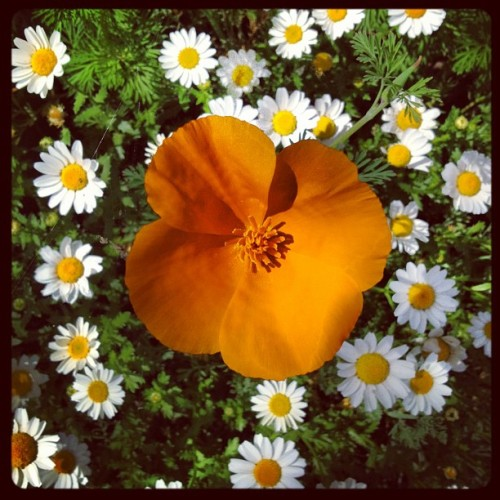 Stand out! #nature #flower #flowers  (Taken with instagram)