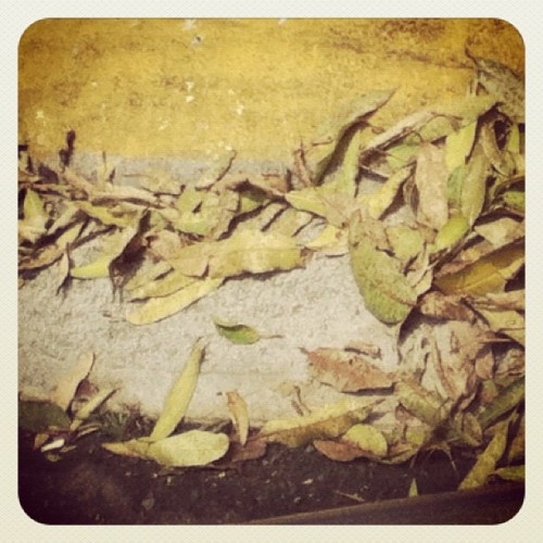 #leaves #spring #dry #pavement #puertorico #laspiedras #nature  (Taken with instagram)