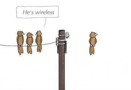#wireless & birds
