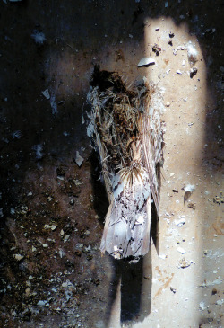 untitled on Flickr.Dead pigeon in a bathroom of the 1895 building of the old Swindon College.  More old Swindon College photos > www.flickr.com/photos/renire/sets/72157629771762861/with/…