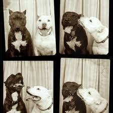 Pit Bulls Make The Best Friends! <3