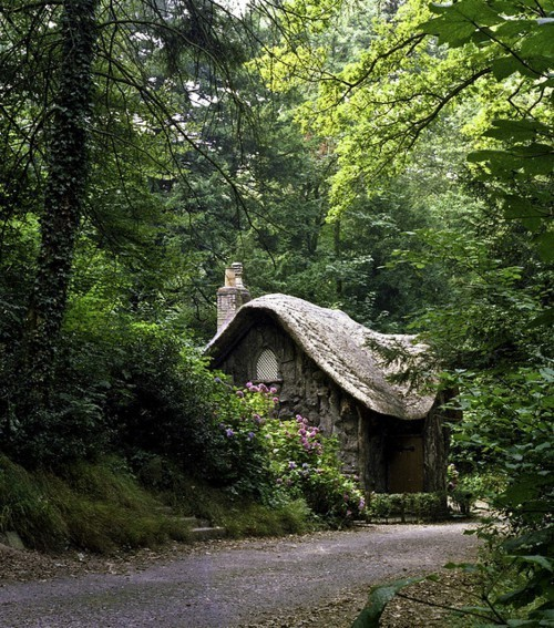Hidden Forest Cottage, The Netherlands photo via brittany